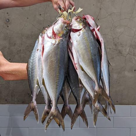 Screenshot_2020-06-10 Fish Butchery ( fishbutchery) • Instagram photos and videos