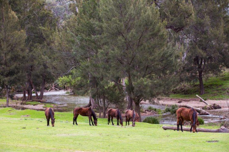 TURON GATES horseriding 2